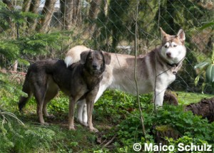 2 Hunde_01