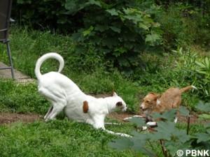 2Spielhunde