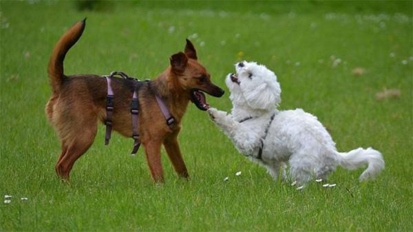 Hunde_spielen nicht_01