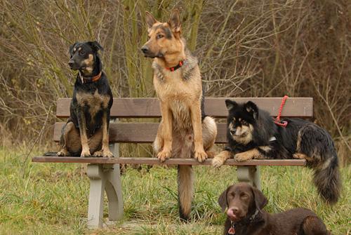 Hundebankreihe