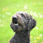 Hundegesicht_03