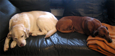 Leila und Chica_sofa