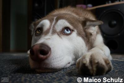 Oh je Hund_01