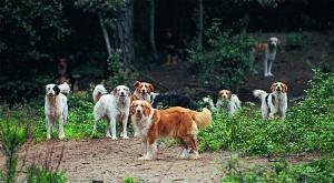 Strassenhunderudel_01t