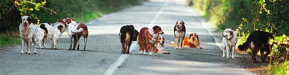 Strassenhunderudel_breit