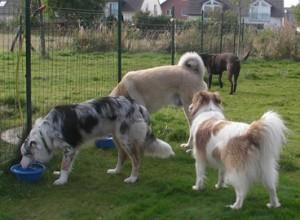 Unstrukturiert 4 Hunde