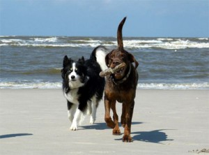 hunde am strand_02