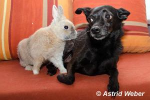 Kaninchen und Tom